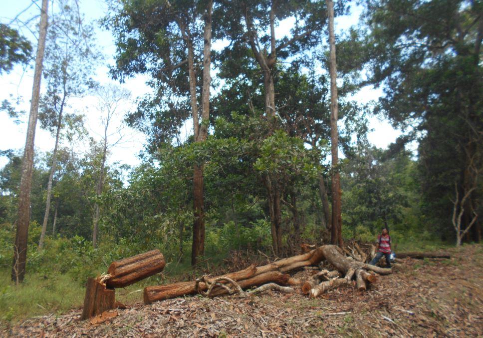 Hutan Lindung kemampo banyuasin
